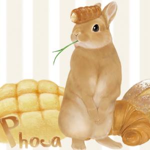 Phoca