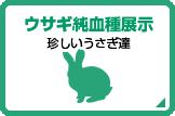 ウサギ純血種展示